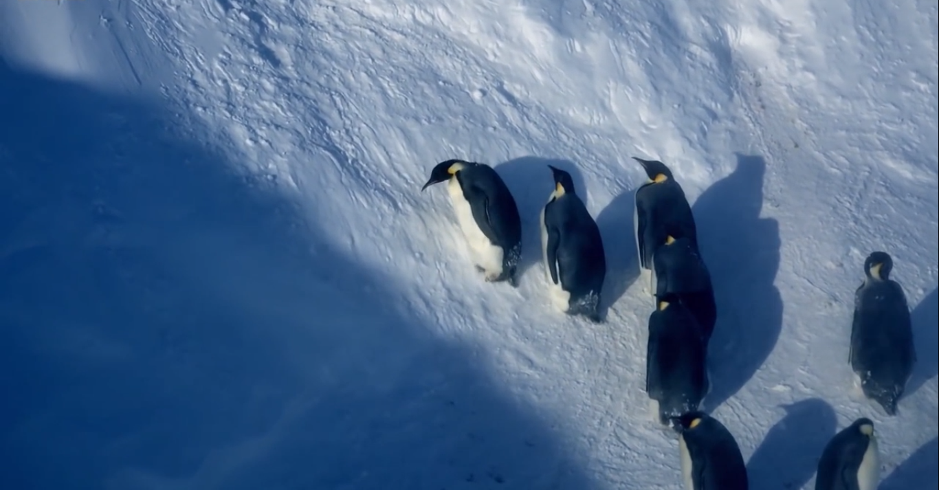 Film crew steps in to save penguins on the brink of death