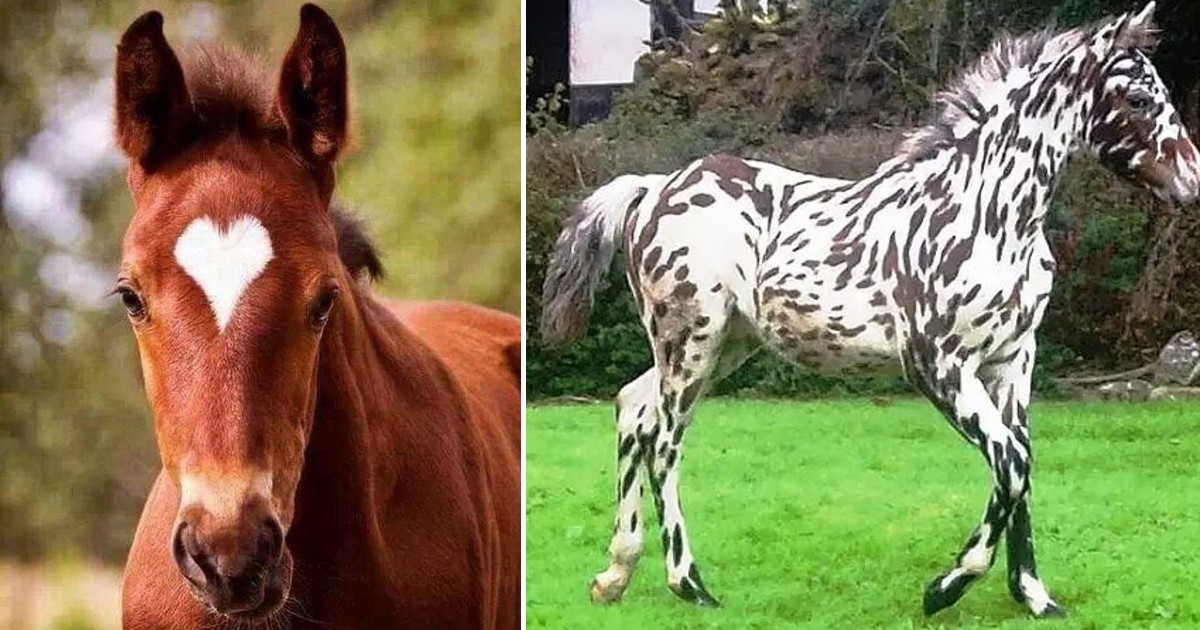 40 Of The Most Breathtakingly Beautiful Horses In The World