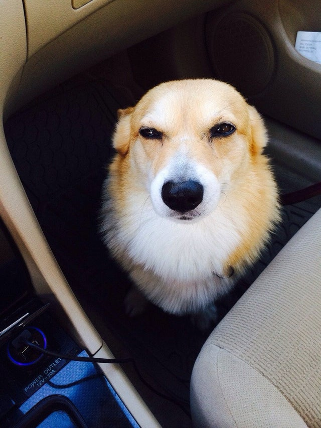 50 Dogs Who Realized They Were Going To Vet Not The Park