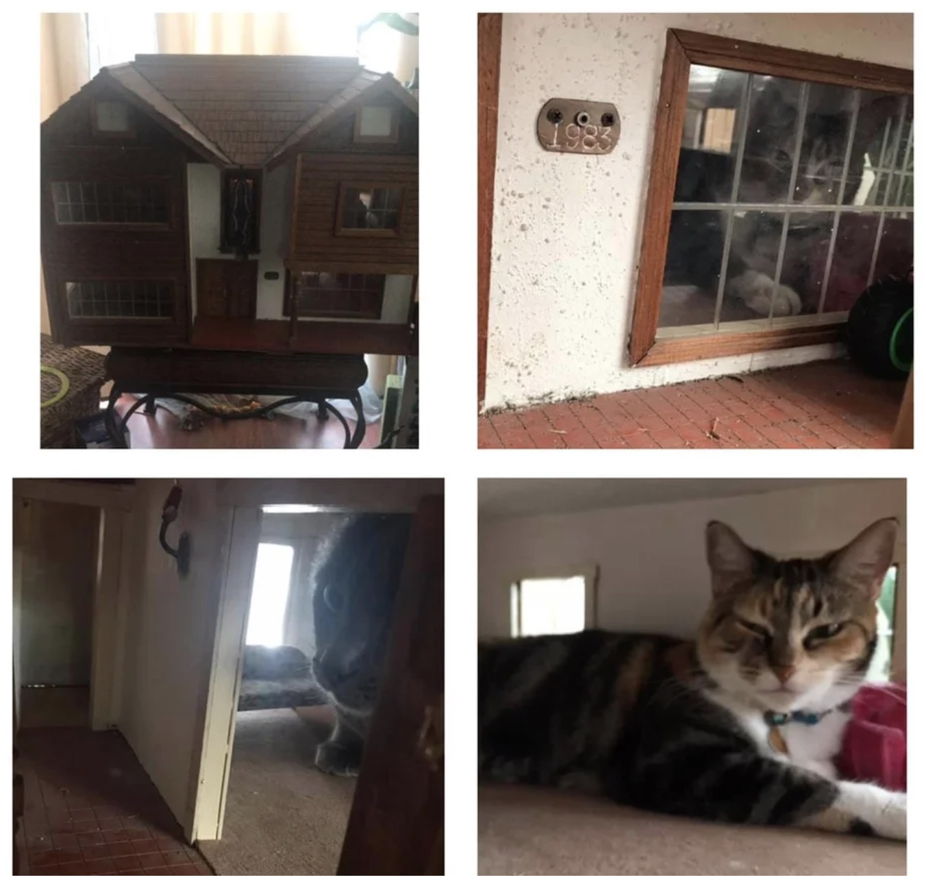https://www.reddit.com/r/AnimalsBeingJerks/comments/j1xqde/friend_got_a_doll_house_for_the_kids_cats/