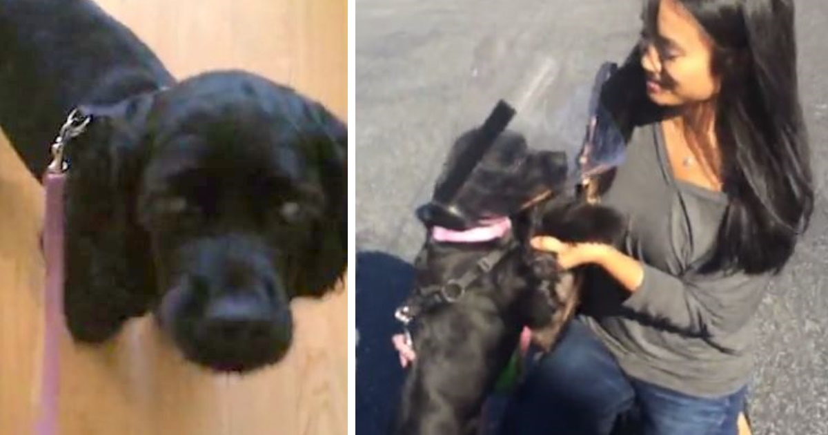 https://rumble.com/v37bs3-adorable-moment-previously-blind-and-stray-spaniel-sees-owners-for-the-very.html